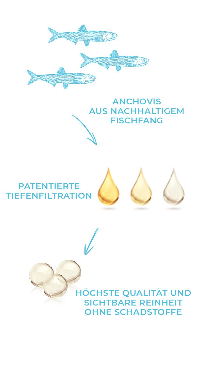 Tiefenfiltration Prozess von Anchovis, über gereinigtes Fischöl zu schadstofffreien Omega 3 Kapseln