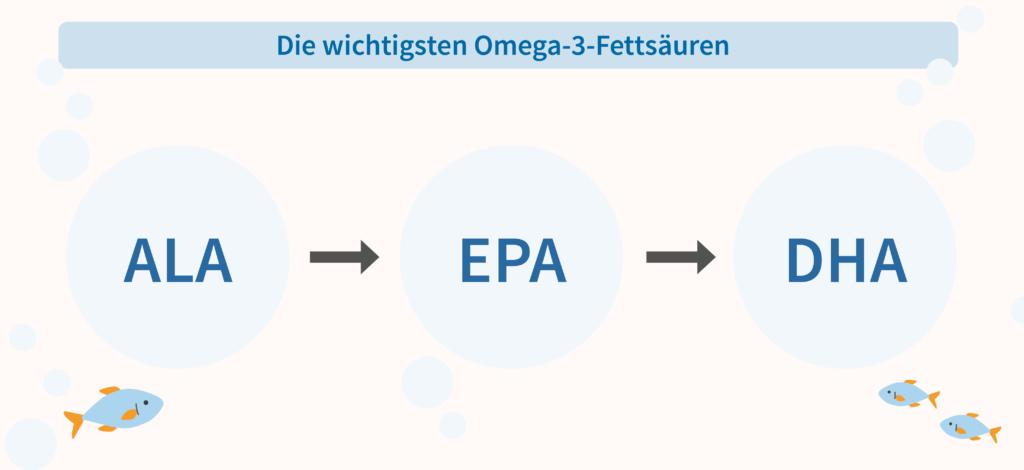 Omega-3-Entwicklung von ALA nach EPA und DHA