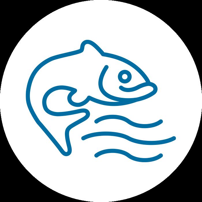 Hochreines Fischöl
