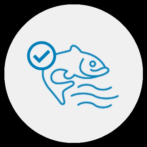 Für White-Omega verwenden wir ausschließlich Anchovis, die aufgrund ihrer Stellung in der Nahrungskette weniger Schadstoffbelastet sind als andere Fischarten.