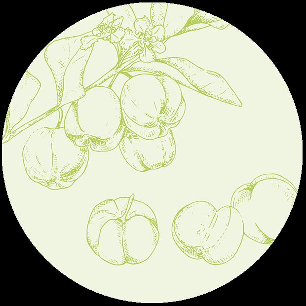 Vitamin C aus Bio Acerola