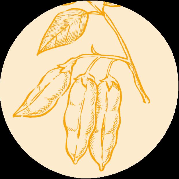 Vitamin D3 aus Algen